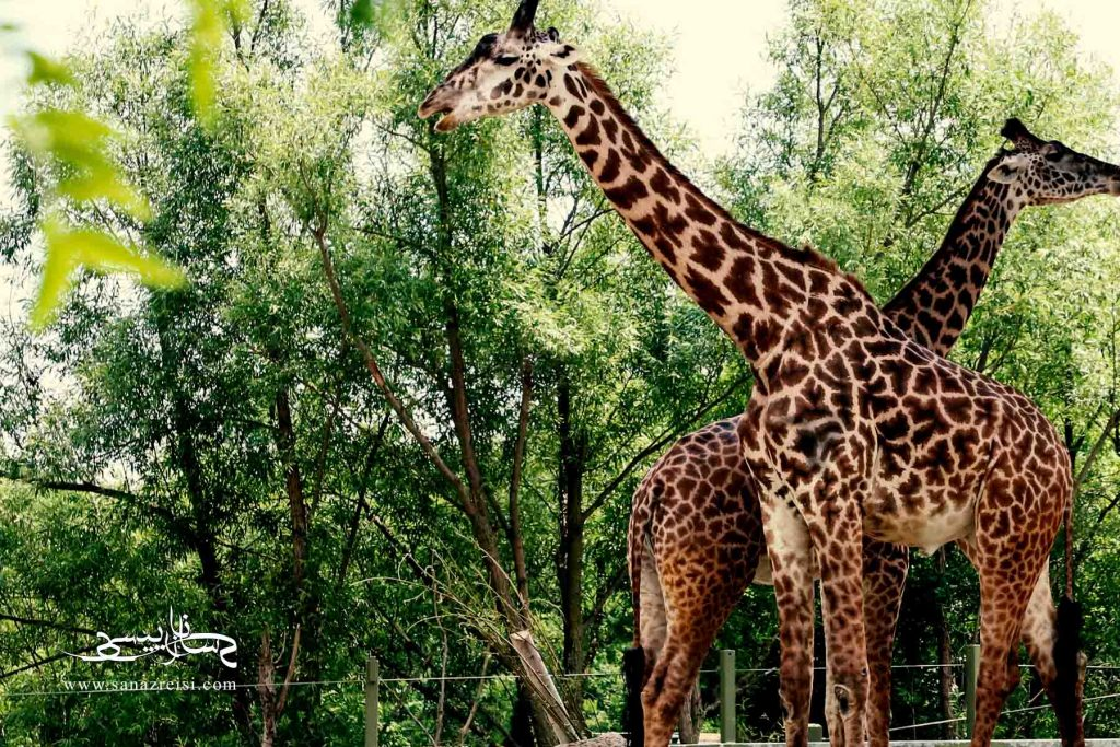 حیات وحش و حیوانات خانگی عکاسی در طبیعت